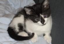 Toni, 06.06.2009